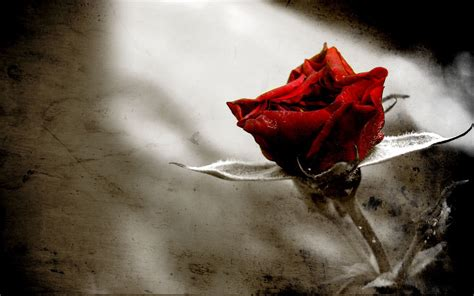 Gothic Rose Wallpaper | Free Wallpapers