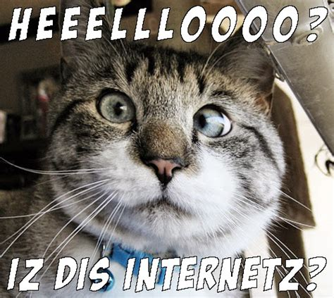 Great Cats Be Funny BLOG: Internet Cat Memes