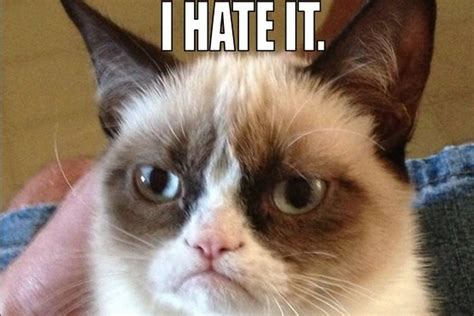 Grumpy Cat gets movie deal, will reportedly star in  big ...