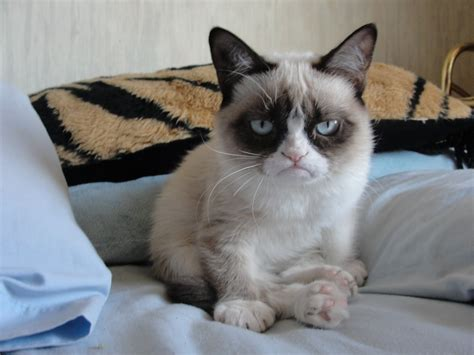 Grumpy Cat Good Morning   Funny Collection World