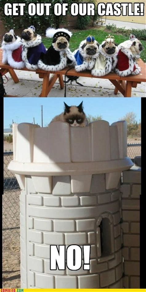grumpy cat in a castle   Dump A Day