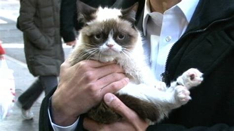 Grumpy Cat Interview 2013 on 'GMA': Meme Star Exclusive ...