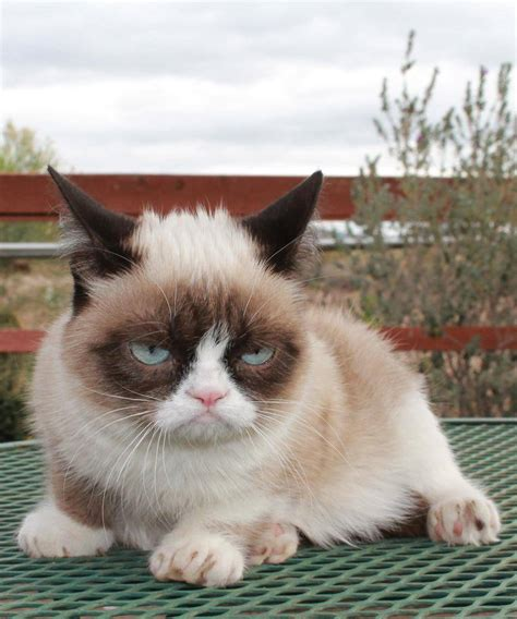 grumpy cat  Jan 09 2013 17:13:35  ~ Picture Gallery