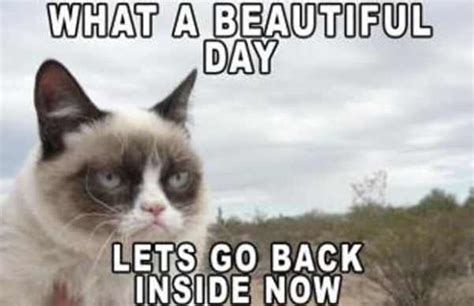 Grumpy Cat Meme, Grumpy Cat Pictures and Angry Cat Meme