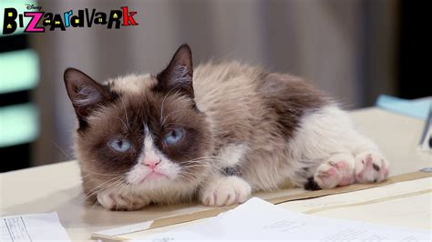 Grumpy Cat Pitch | Bizaardvark | Disney Channel   YouTube
