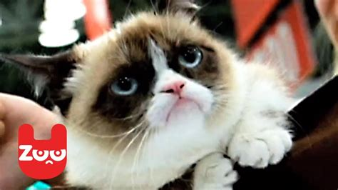 Grumpy Cat Releases A Book   YouTube