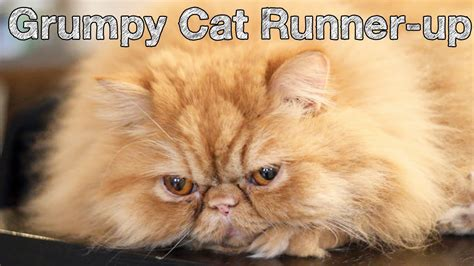 Grumpy Cat Runner Up    Conversation Cats #17   YouTube