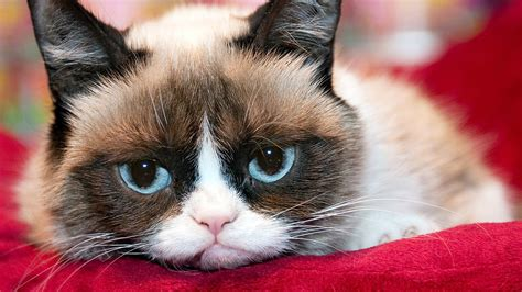 Grumpy Cat s Worst Movie Ever First Look   YouTube