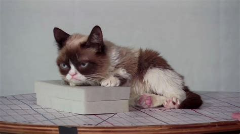 Grumpy Cat to be immortalized in wax by San Francisco's ...
