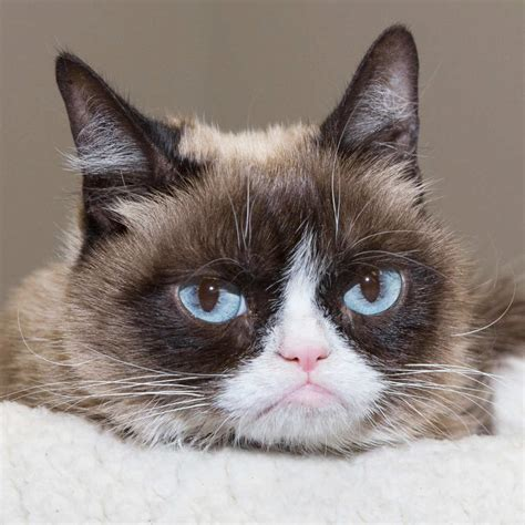 "Grumpy Cat to Join the Cast of ""Cats"" – Cat Daily News"