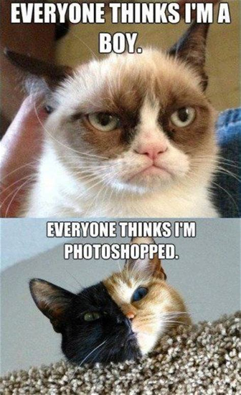 Grumpy is a girl cat! | Fashion, shoes, hair, nails ...