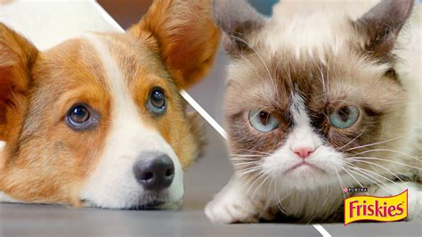 Happiness Finds Grumpy Cat | FunnyDog.TV