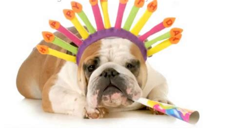 Happy Birthday   Funny Dogs   Funny Videos   Funny Quotes ...