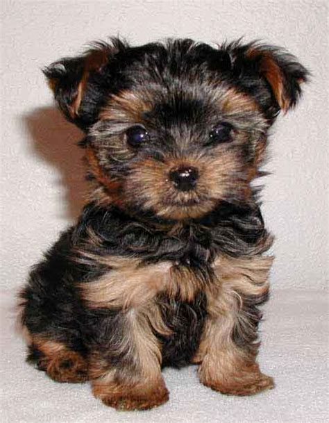 HD Animals: small dogs for adoption