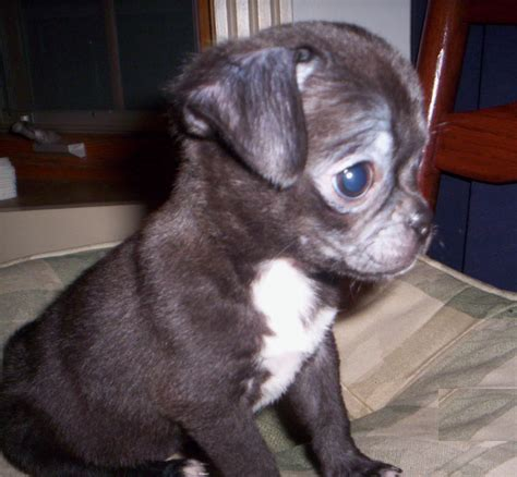 HD Animals: small dogs for sale
