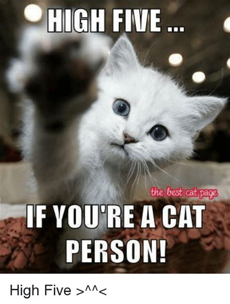 HIGH FIVE the Best Cat Page IF YOURE a CAT PERSON! High ...