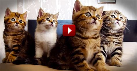 Hilarious Dancing Cats Will Make Your Day   Animals Video