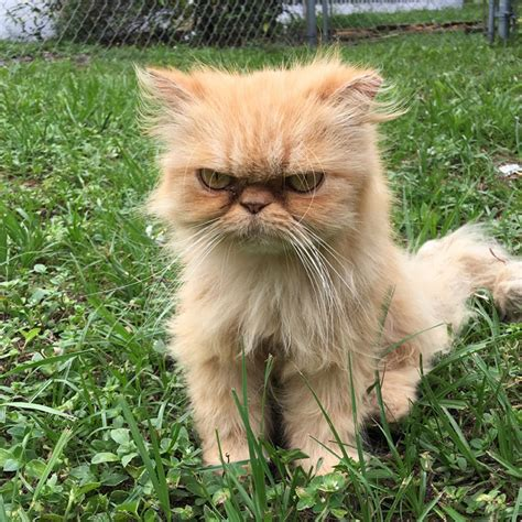 Homeless Grumpy Cat Found During House Inspection Gets ...