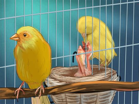 How to Breed Canaries: 10 Steps with Pictures wikiHow