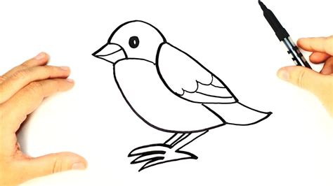 How to draw a Bird for kids | Bird Drawing Lesson Step by ...
