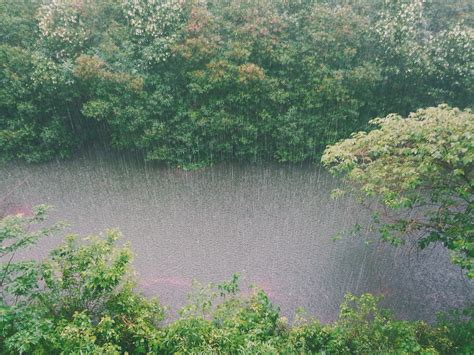 How to protect garden from heavy rain | Royal Tree Care