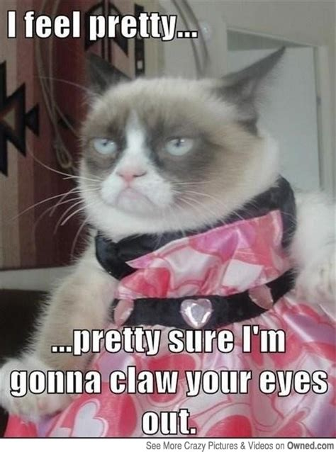 I Feel Pretty.. Cat Meme   Cat Planet | Cat Planet