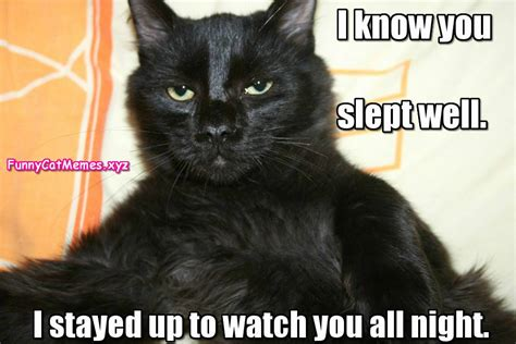 I Know You Slept Well!   Funny Cat Memes