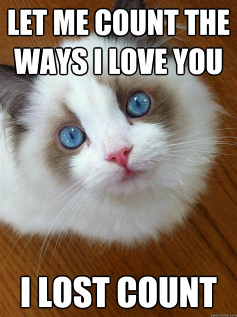 Image Gallery kitty loves you meme