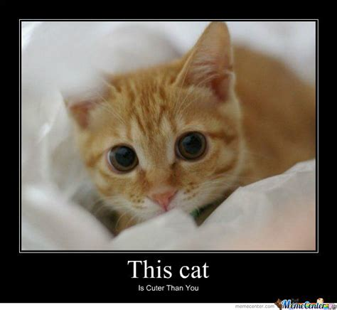 Image Gallery kitty memes