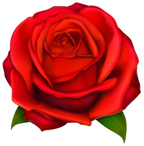 Image of clip art red rose 2 red roses clip art images ...