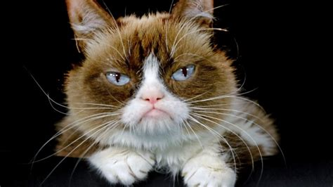Internet star Grumpy Cat to join a Broadway show  Cats ...