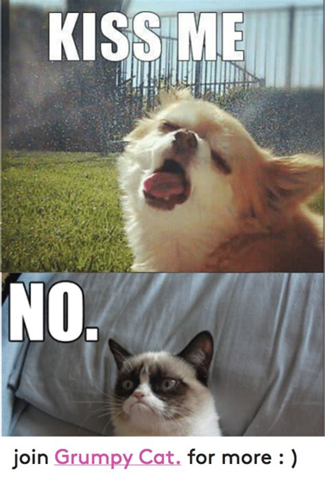 KISS ME NO Join Grumpy Cat for More | Cats Meme on SIZZLE