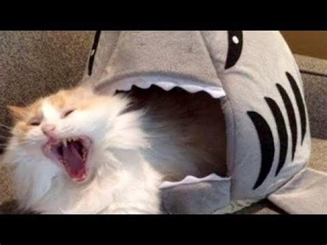 LAUGH SO HARD YOU'LL CRY - Funniest CAT VIDEOS compilation ...