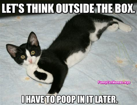 Let s Think Outside The Box.   Funny Cat Memes