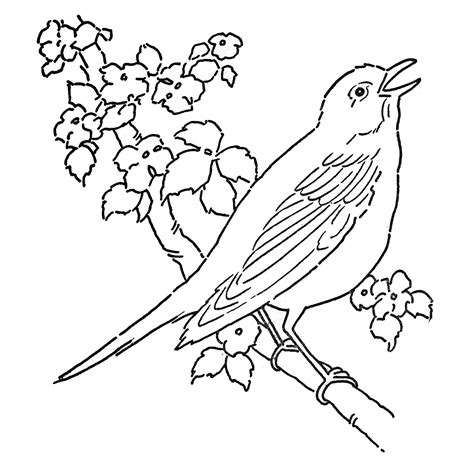 Line Art   Coloring Page   Bird with Blossoms   The ...