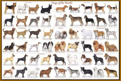 List Of Dog Breeds | Dog Breeds With Pictures