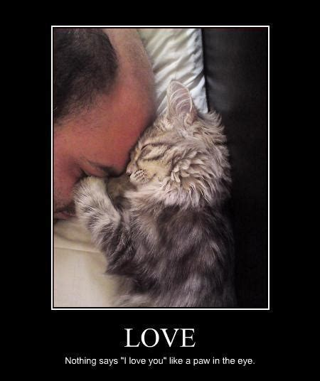 love quote. #cat #humor #cats #funny #quotes #meme # ...