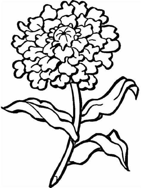 Marigold Flower coloring pages. Download and print ...