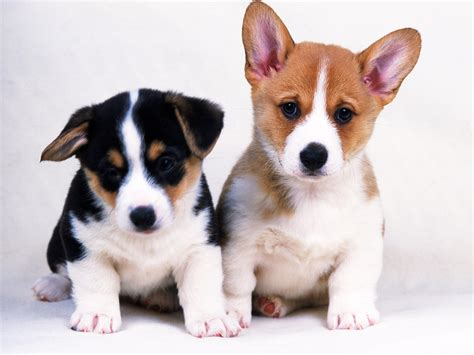 May 2012 | Dogs Wallpapers Backgrounds
