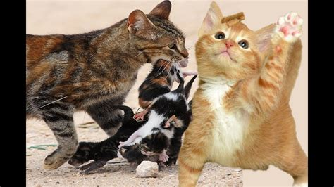 most amazing cat video ever | funny cat compilation ...