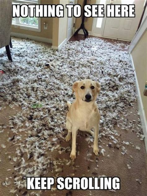 Nothing To See Here – Dog Humor