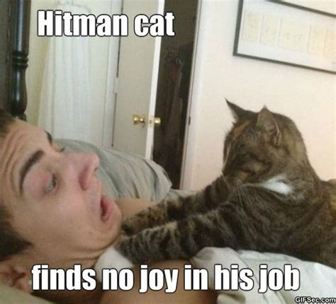 Our 10 Favourite Cat Memes | Kittenads