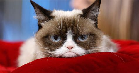 Parody Is Dead: The Real Grumpy Cat Will Appear in 'Cats ...