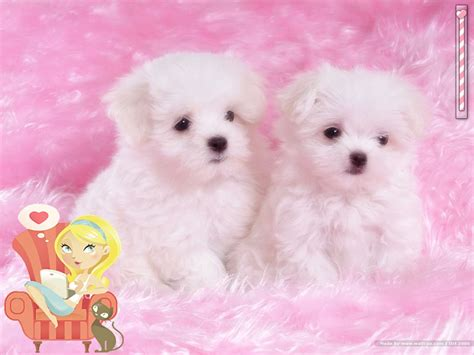 PERRITOS | Publish with Glogster!