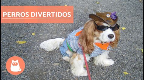 Perros divertidos   Funny dogs   YouTube