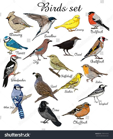 Pics For > Birds With Names In English