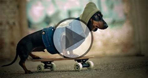 Pin Funny Videos Pictures Clean Humorous on Pinterest