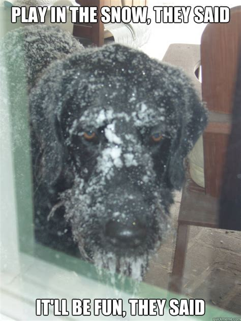 PLAY IN THE SNOW, THEY SAID IT LL BE FUN, THEY SAID   Sad ...