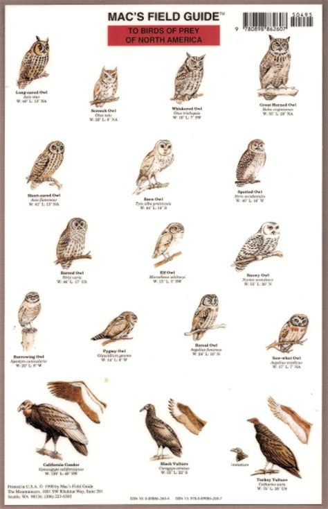 Poster Birds of America images