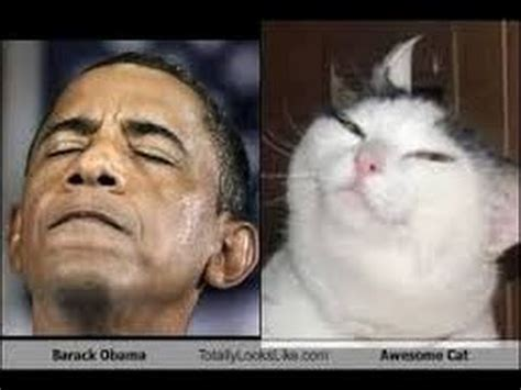 President Barack Obama mocks  Grumpy Cat  Republicans ...